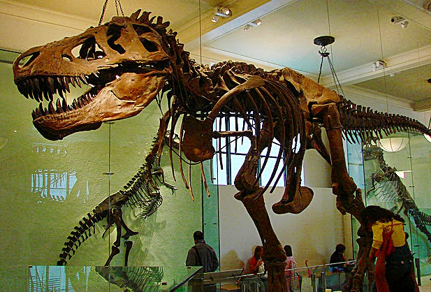 original_T-Rex-Museum-of-Natural-History-New-York-Allie-Caulfield-3.jpg