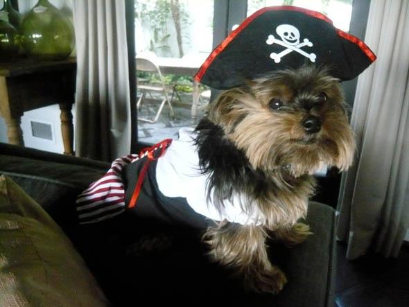 molly-sims-puppies-halloween-costumes-simsoween-5.jpg
