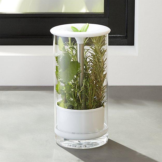 glass-herb-keeper.jpg