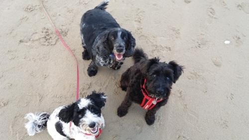Beach hounds.jpg