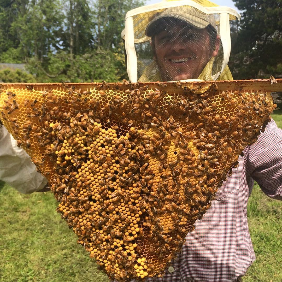 dane bee keeper at plum nelli
