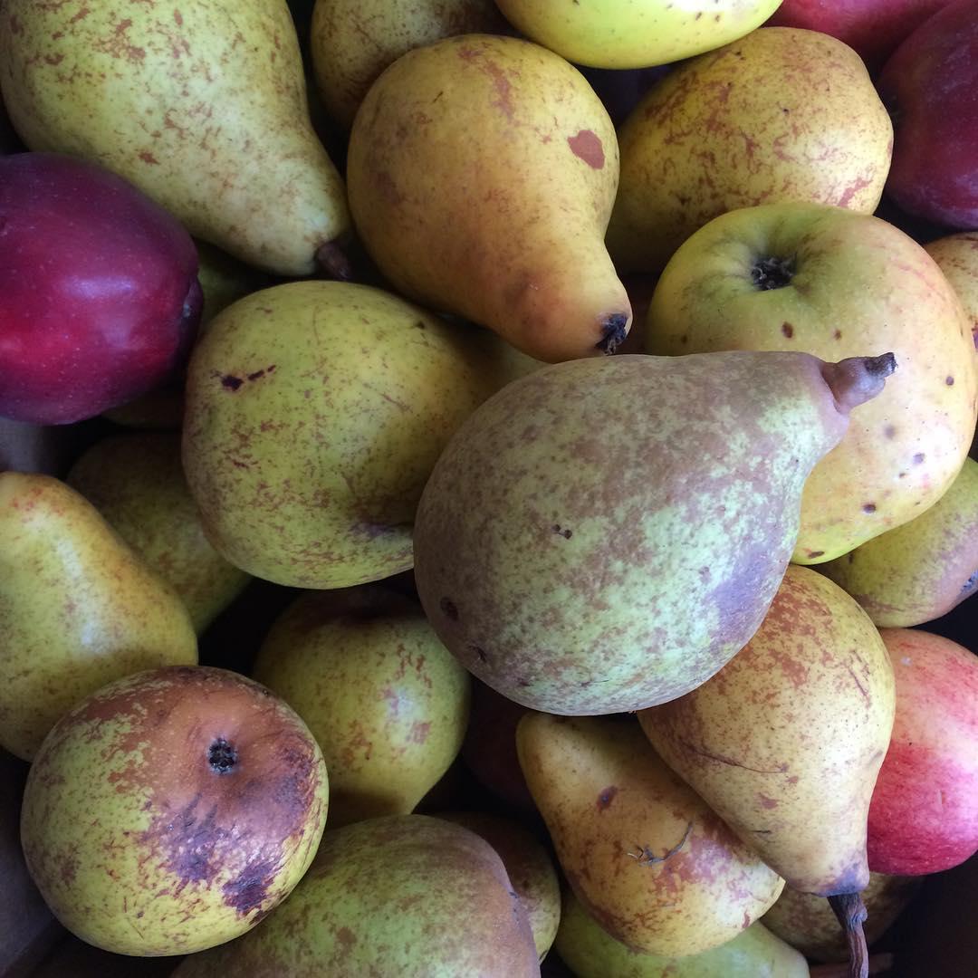 apple and pear season at plum nelli washington.jpg
