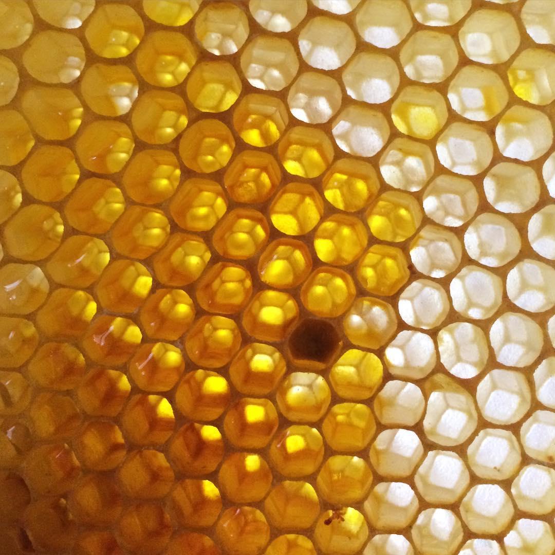 honey at plum nelli washington.jpg