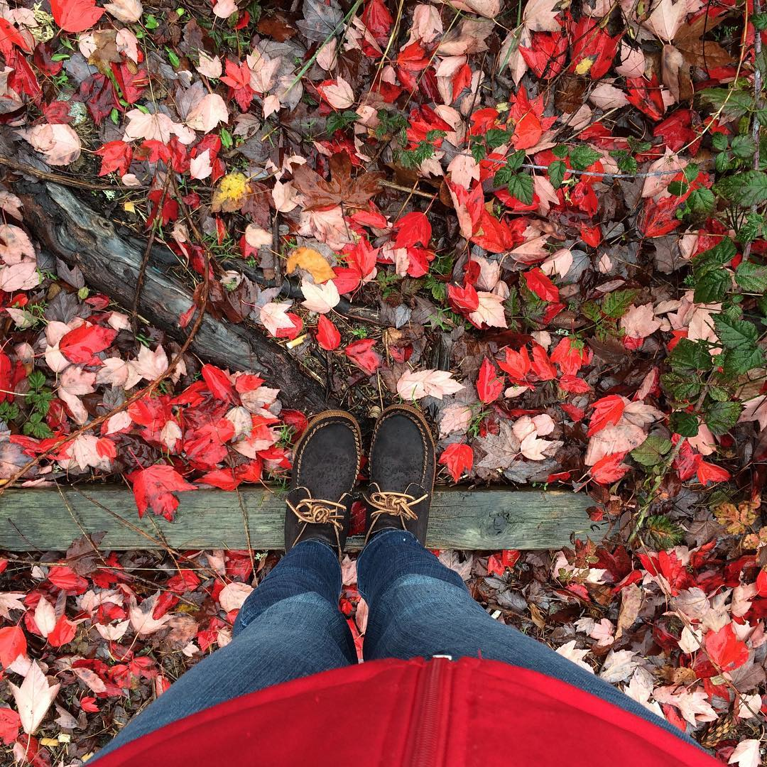 fall leaves at plum nelli.jpg