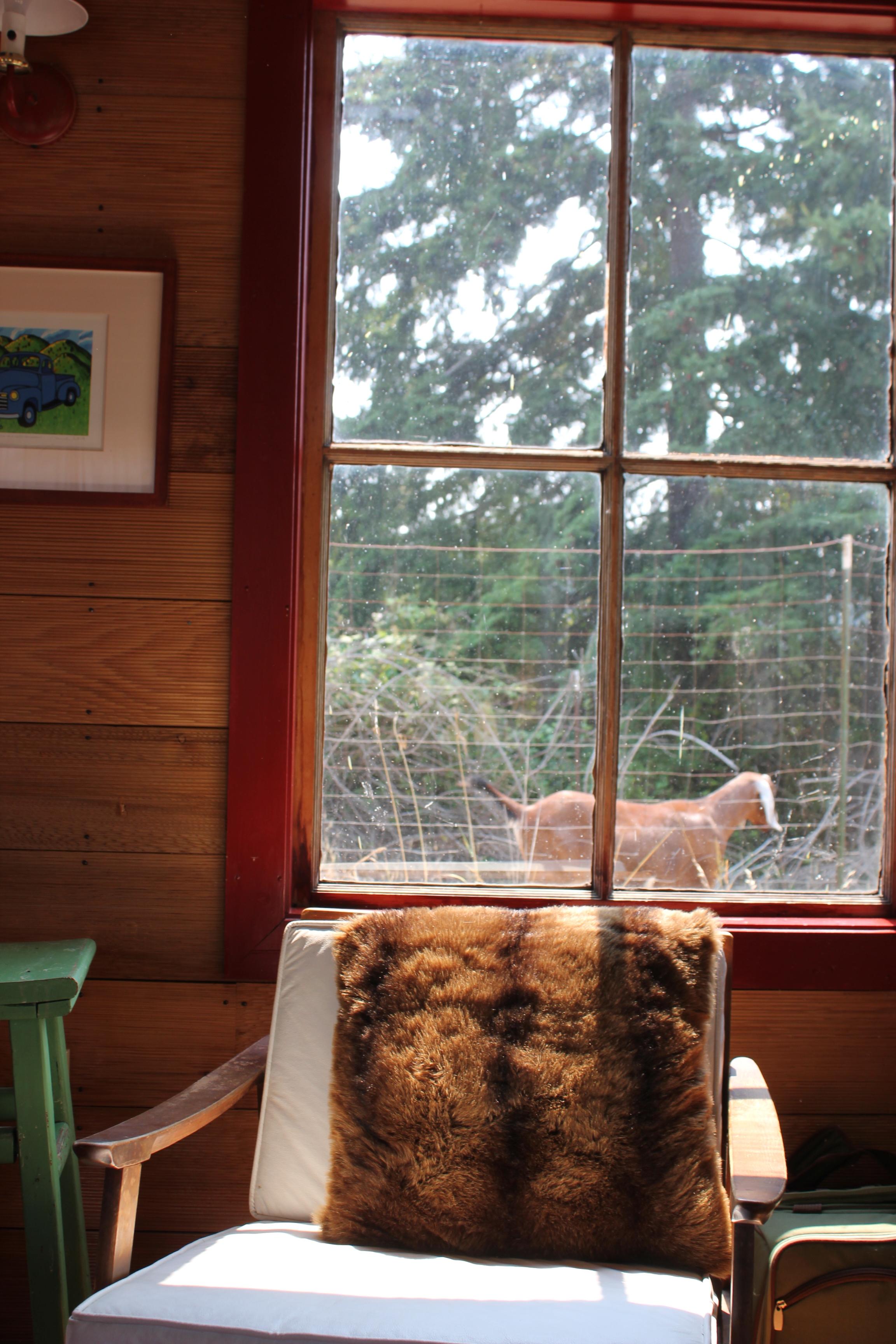 singing frog cabin goat outside the farm window.JPG
