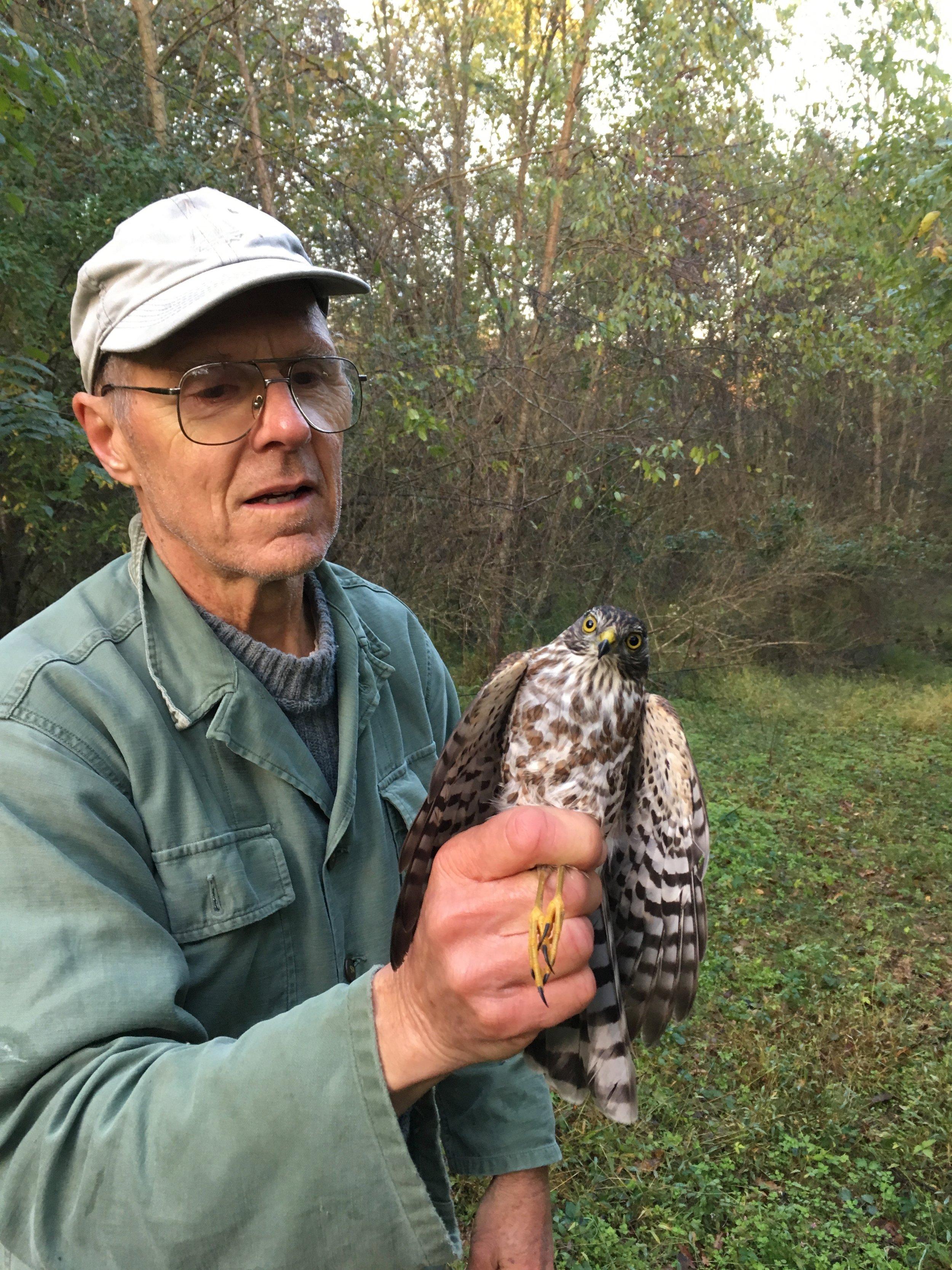 John with Sharp-shinned Hawk