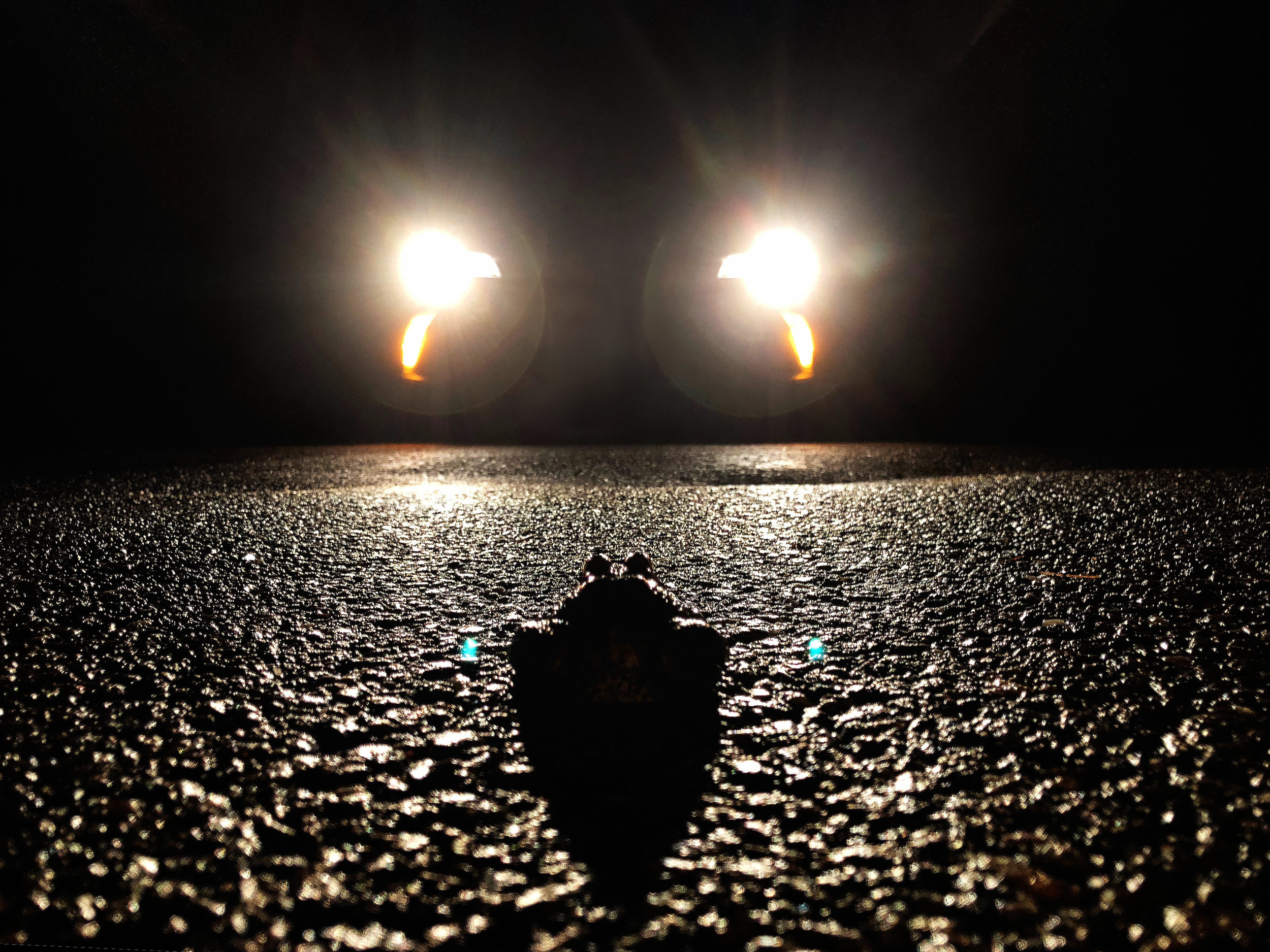 A frog looks into the headlights of an oncoming car. (The frog survived.) (Anna Miller/Animalia Podcast)