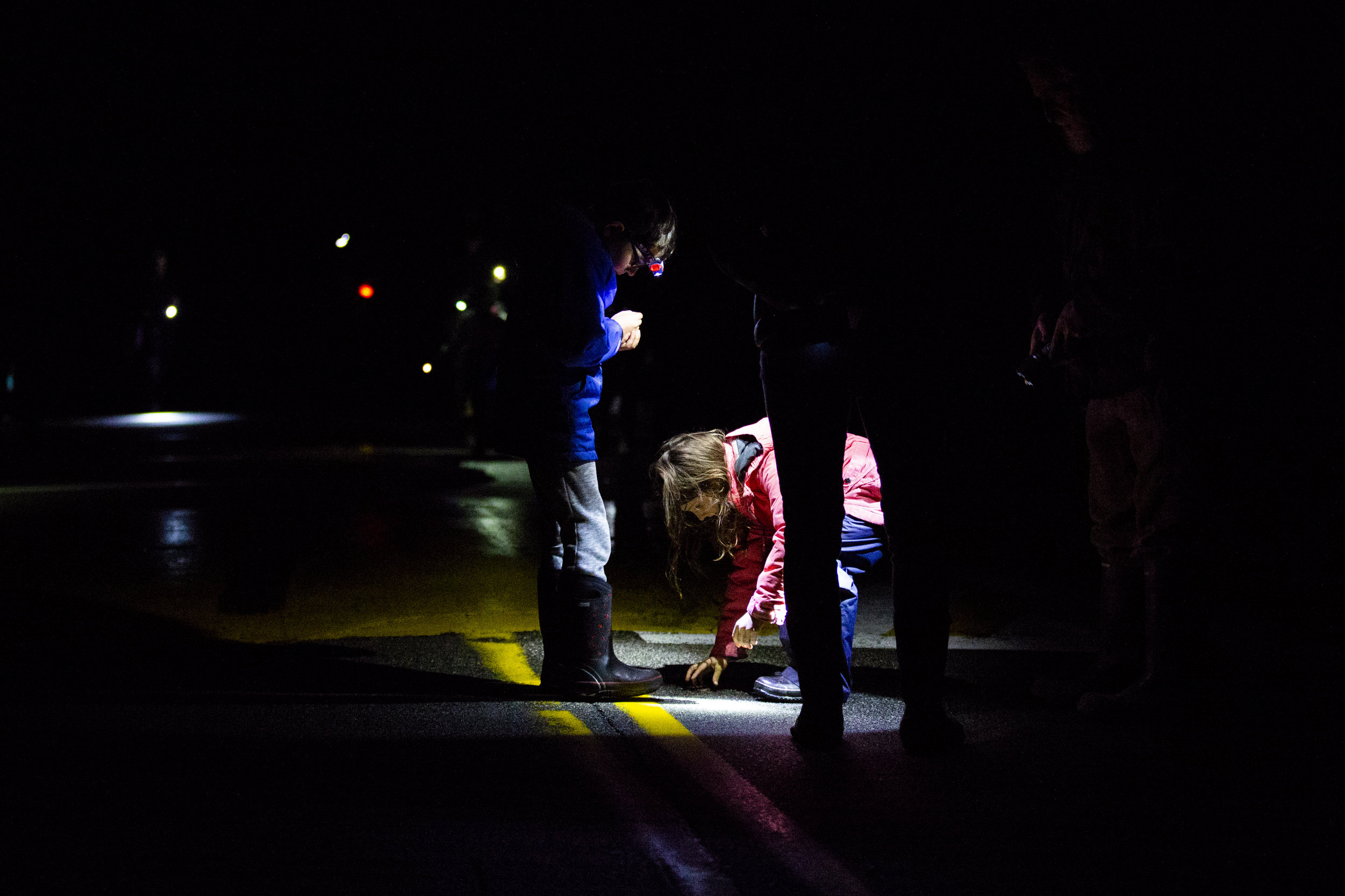 Keene, NH - Salamander Crossing Brigade Volunteers, including Declan Read, (left), 8, come out on warm, rainy nights to help frogs and salamanders to cross the road during the annual springtime amphibian migration. (Anna Miller/Animalia Podcast)