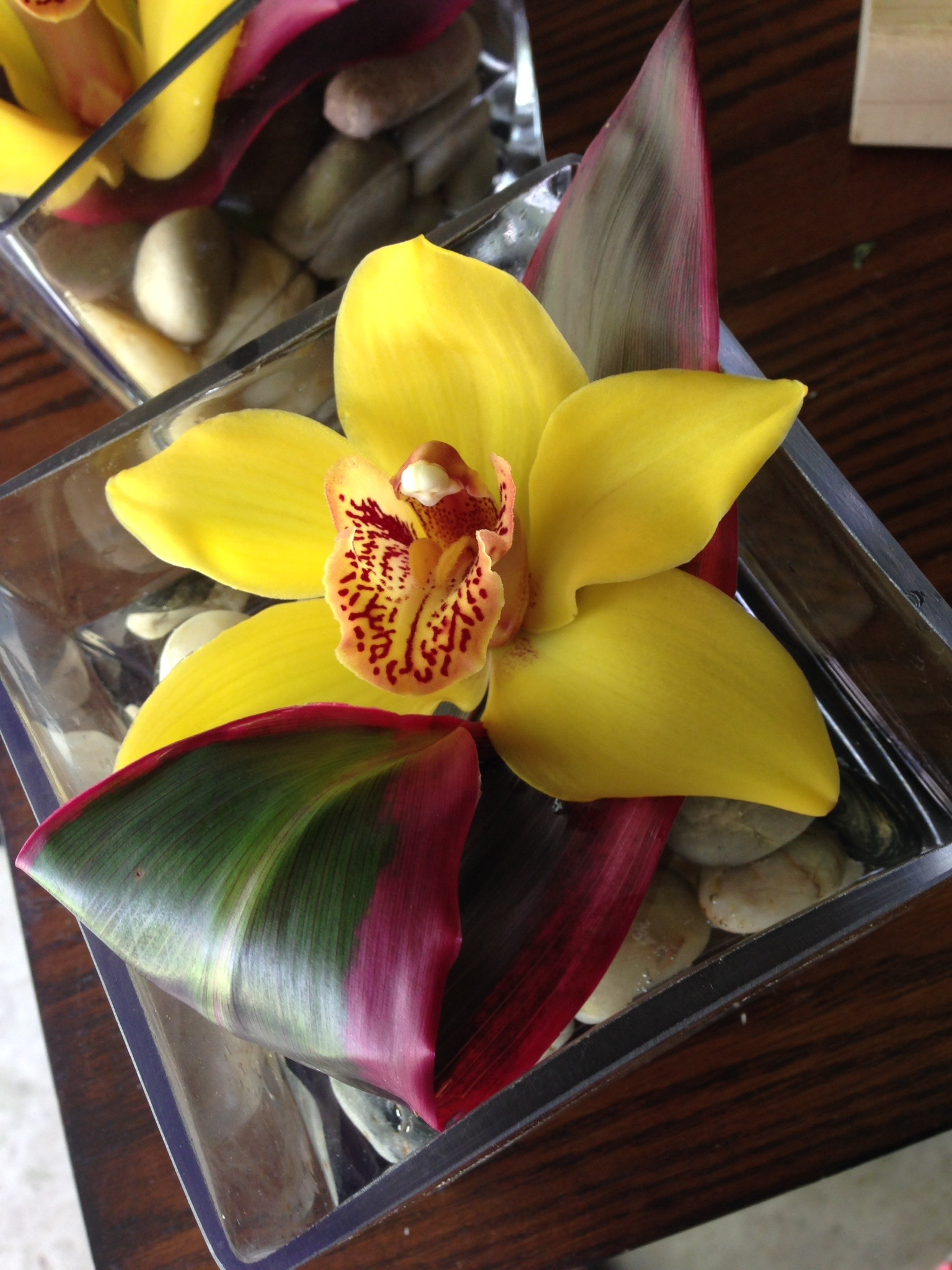 a single yellow cymbidium shines atop a loop of a red variegated Ti leaf. Simple & elegant!