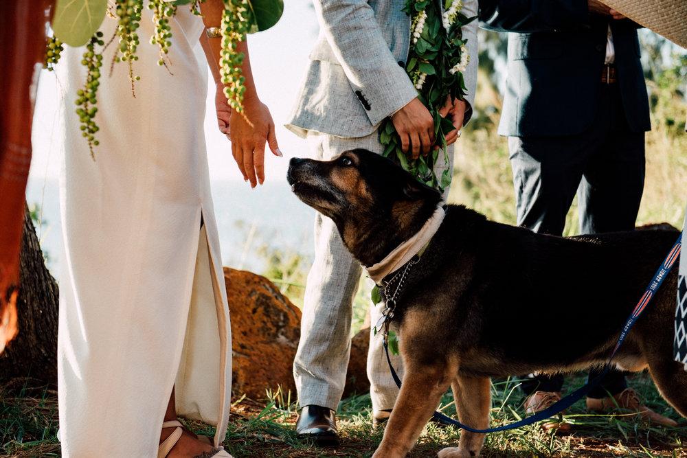 3aea8-2017-05-20-andrew2bren_wedding-516.jpg