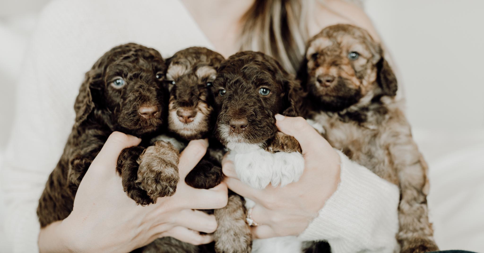 houston-wedding-photographer-in-home-maternity-session-puppies- Houston Wedding Photographer -Kristen Giles Photography-62.jpg