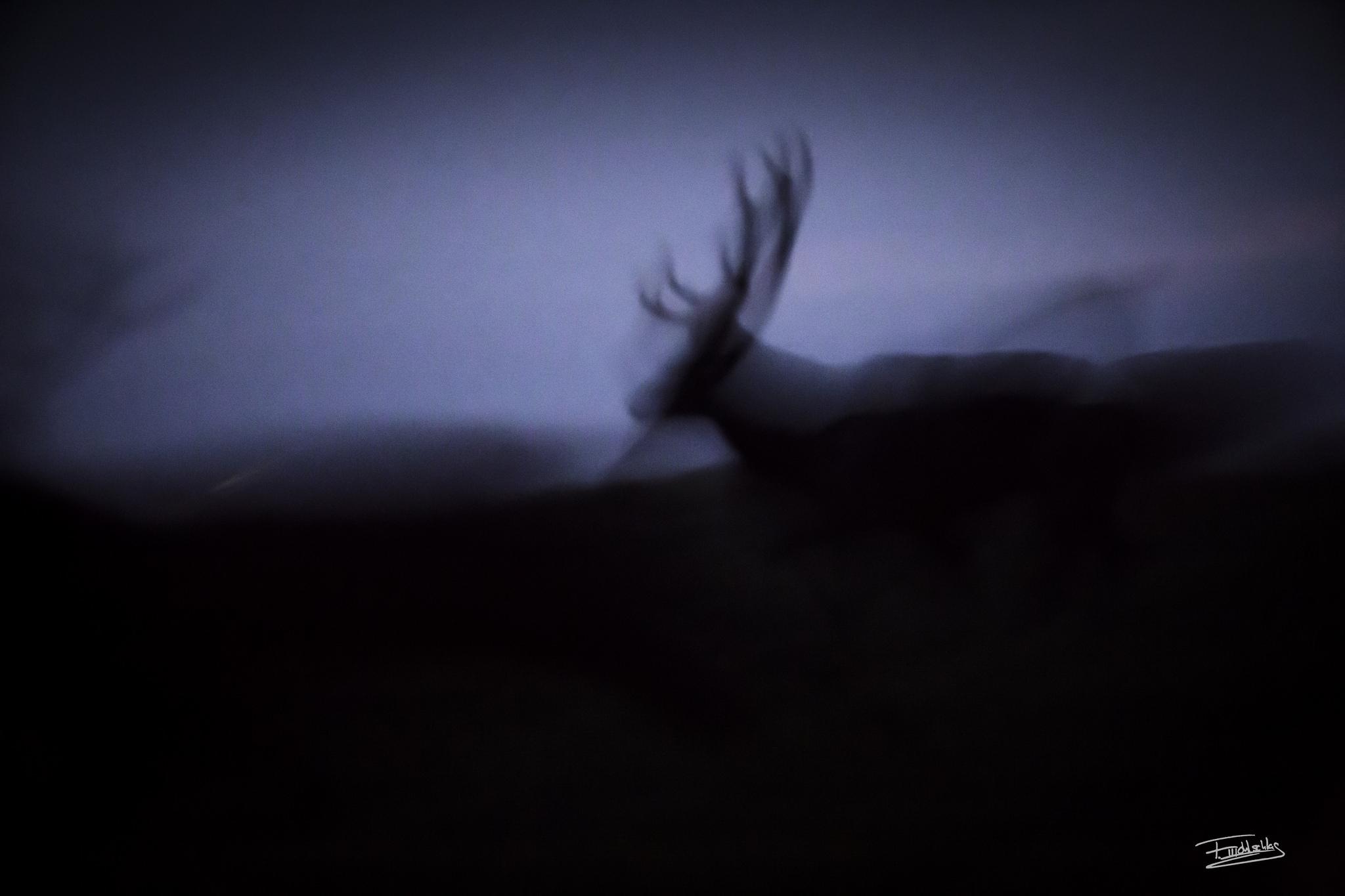 Wild13.jpg