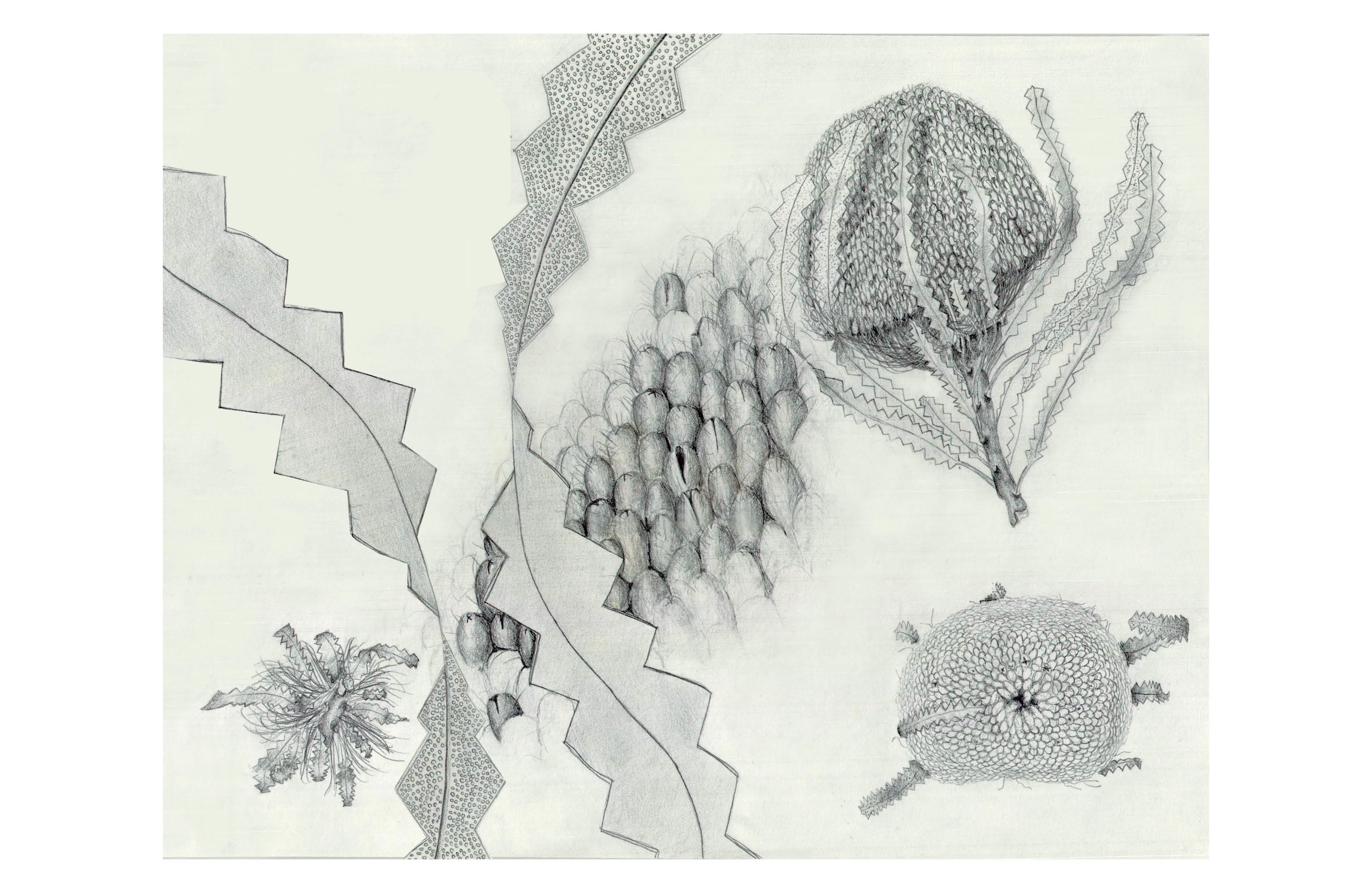 V2_Nature Lab Plant Drawing_With Website Template White Border.jpg