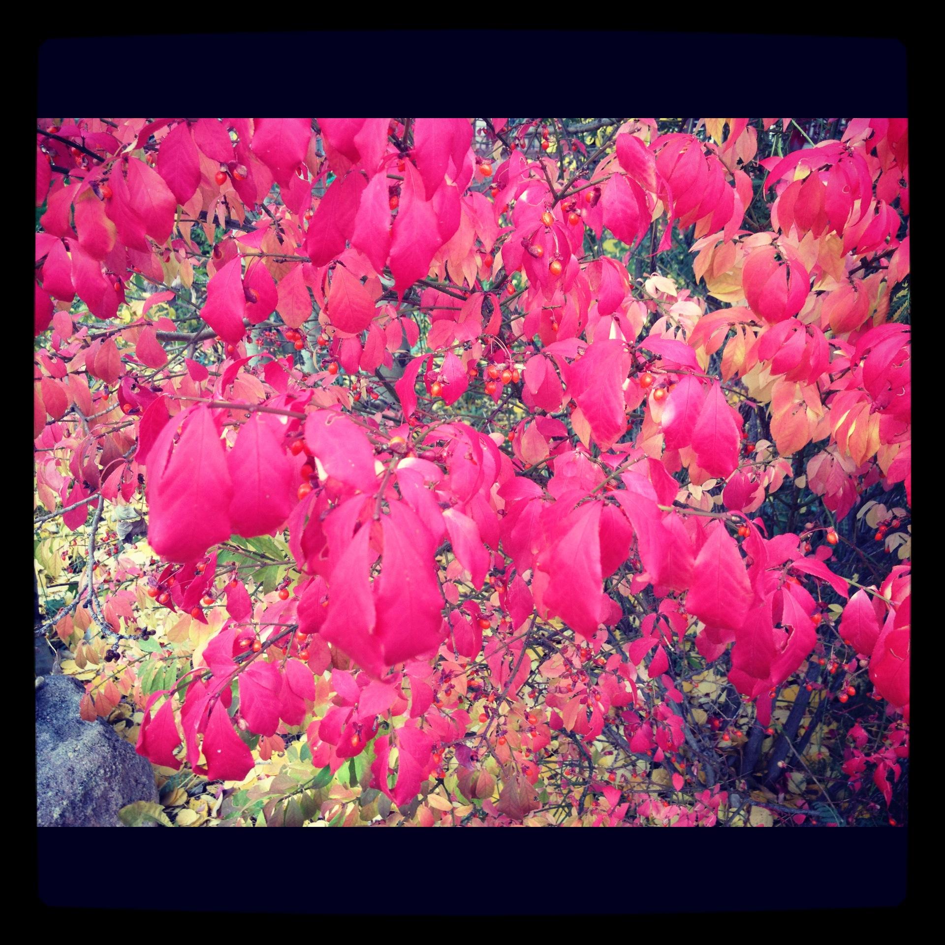 fallcolor.jpg