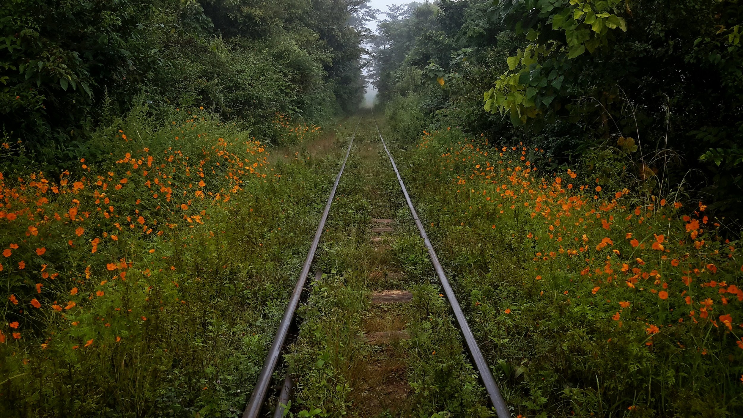 Train tracks in Kalaw, Shan State