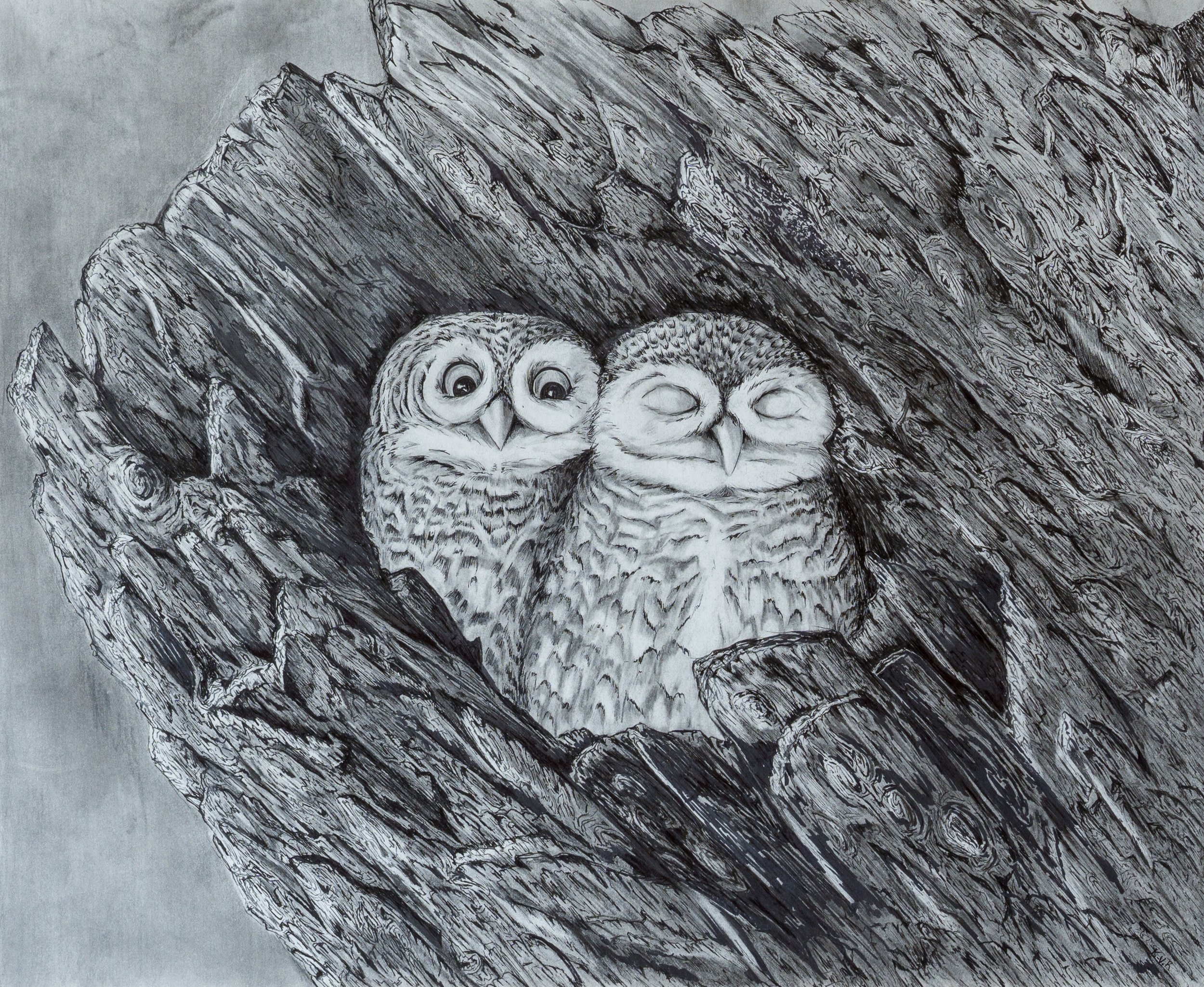 """SOLD    Burrowing Owls   14"""" x 17"""" pen and pencil drawing 2015. © Kvanraay Designs 2017.  For sale. For more information go to   shop."""