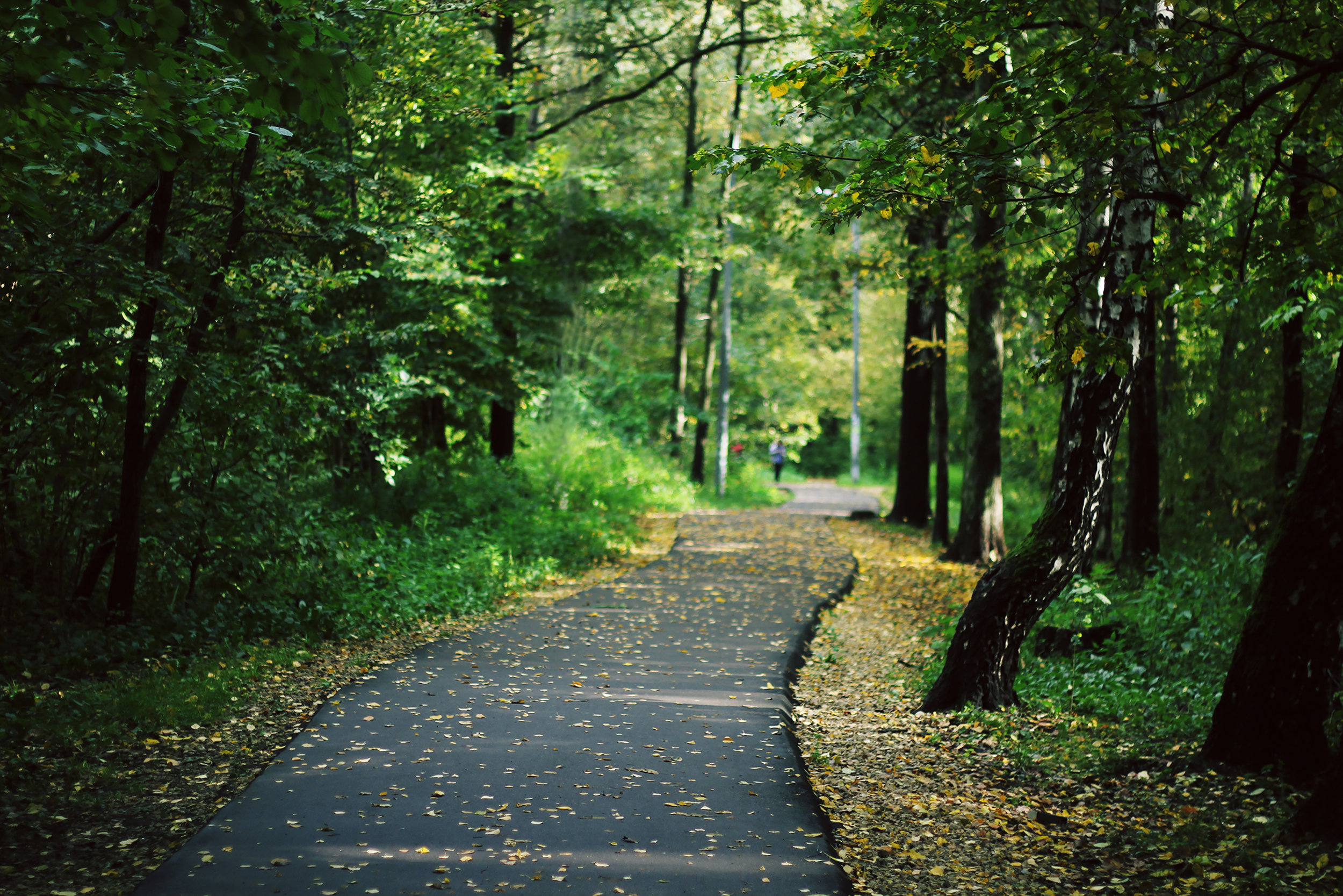 Coaching on the Go - Individual coaching sessions provided in an active outdoor setting: a walk in a local park, river valley trail, or even the botanical gardens!