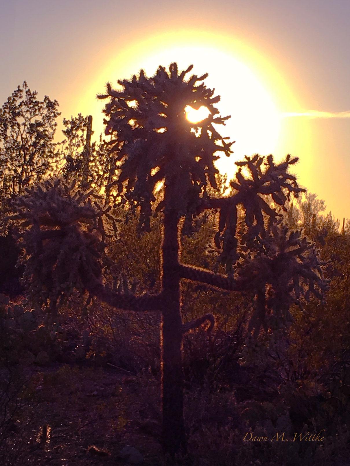 Cactus Love    Photo by Dawn M. Wittke    Taken in Saguaro National Park, Az     .      .      .