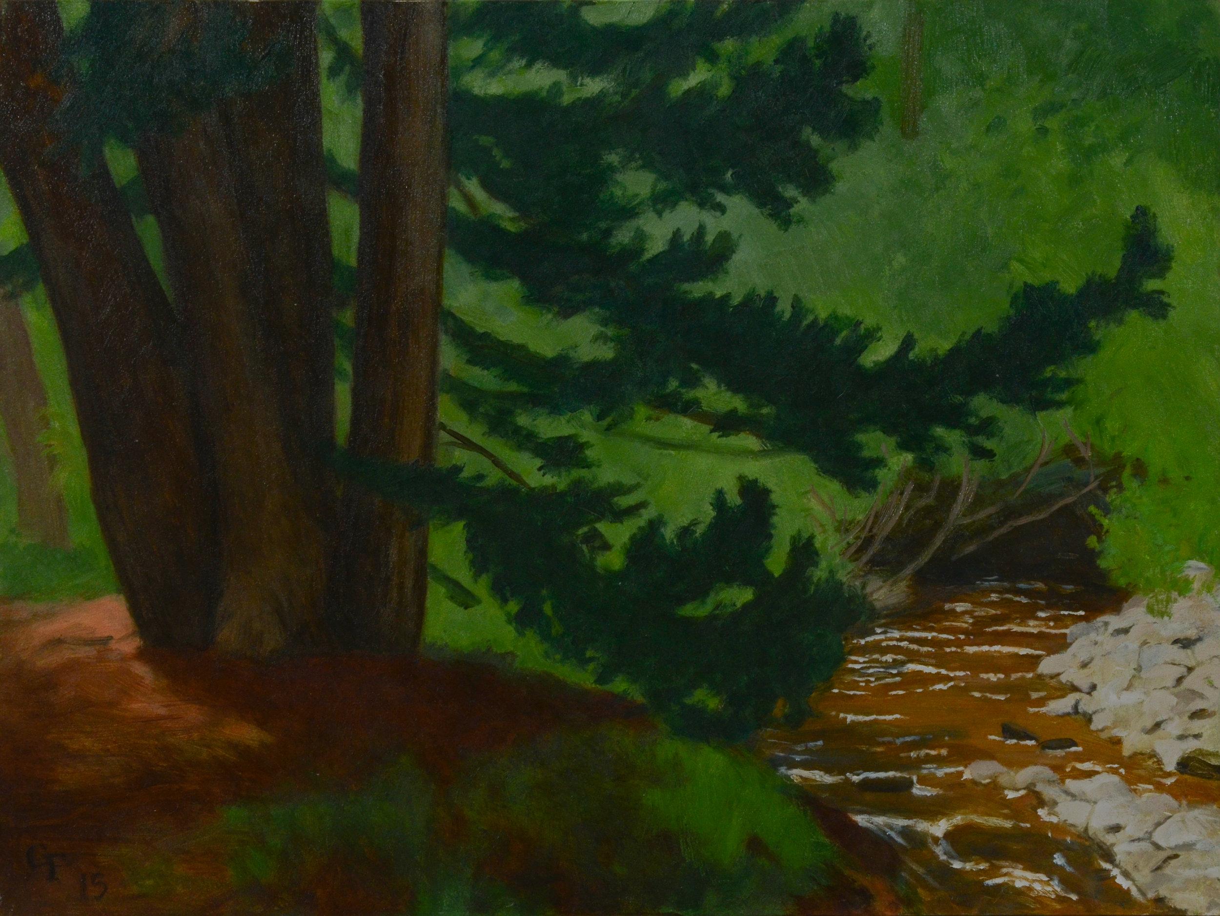 """Cedar Grove, oil on panel, 9"""" x 12"""""""