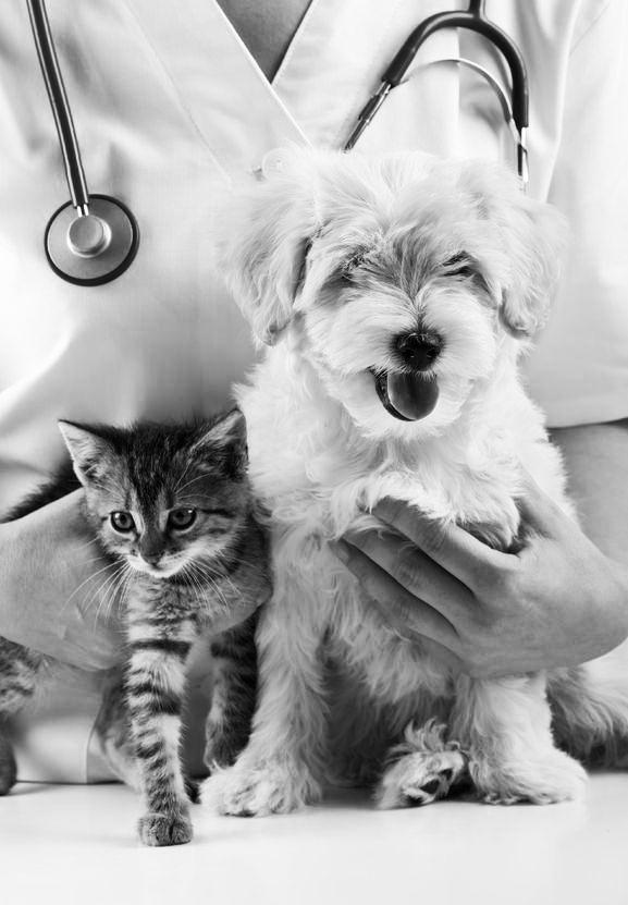 dogcat2bw.jpg