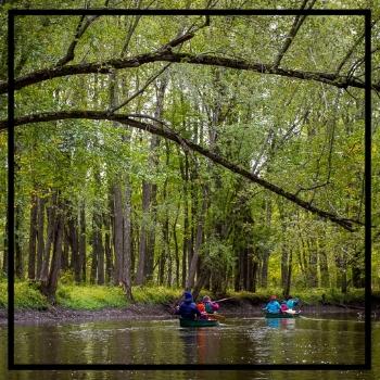 friends canoeing through dense forest