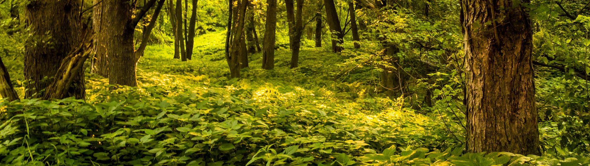 rich floodplain fairy forest