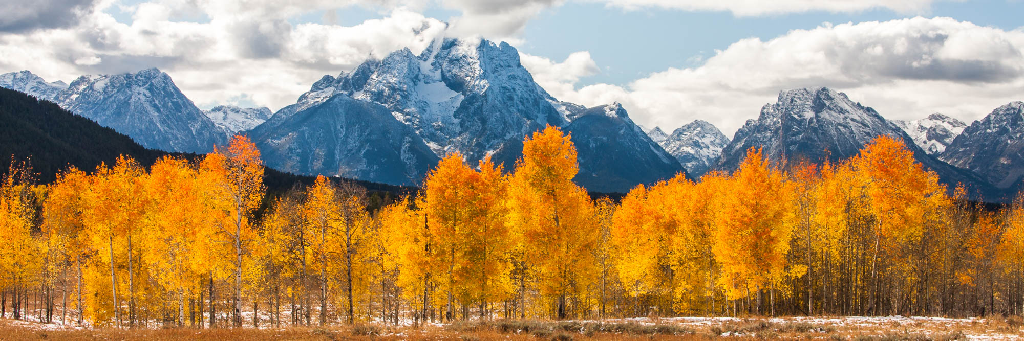 rocky mountains and orange aspens