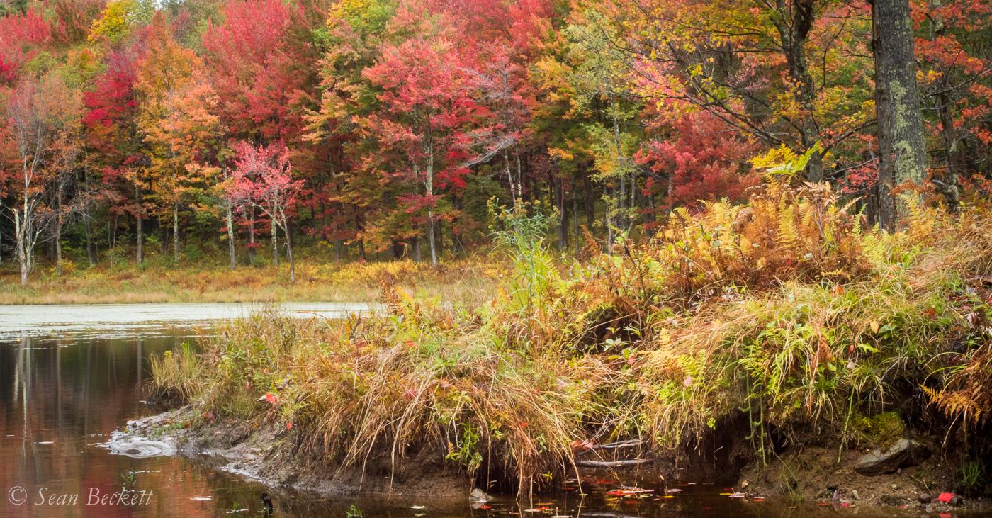 AutumnVT-1.jpg