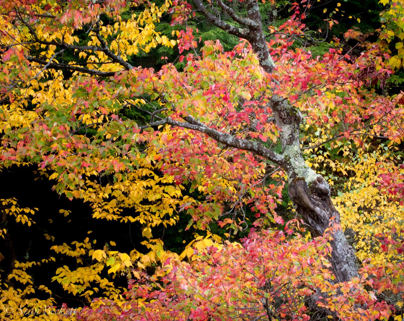 AutumnVT-2.jpg