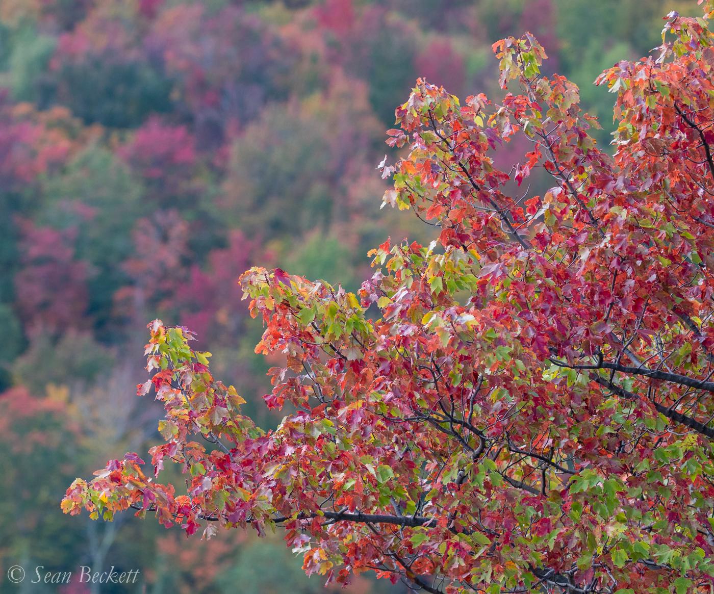 AutumnVT-4.jpg