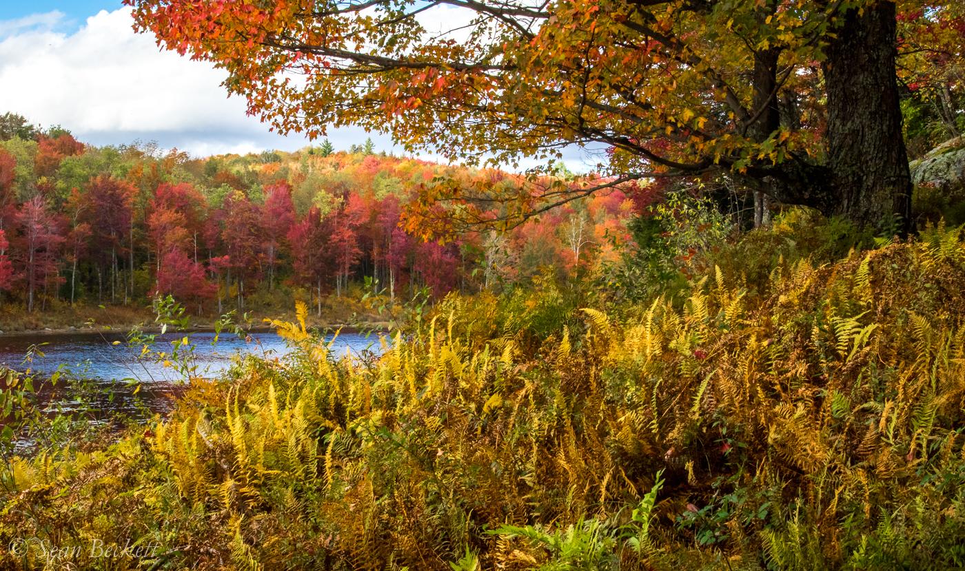 AutumnVT-5.jpg