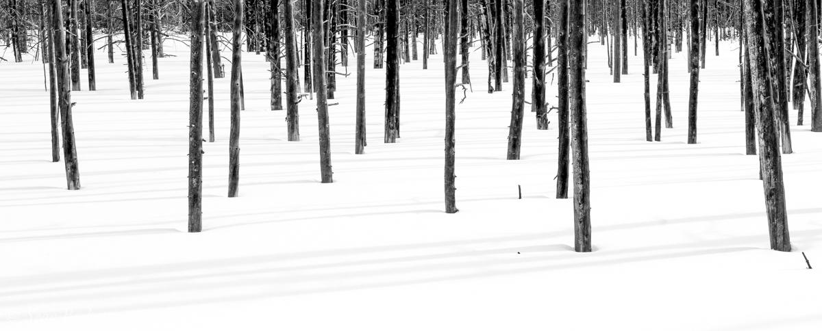 NHAJan31_18_Yellowstone-7.jpg