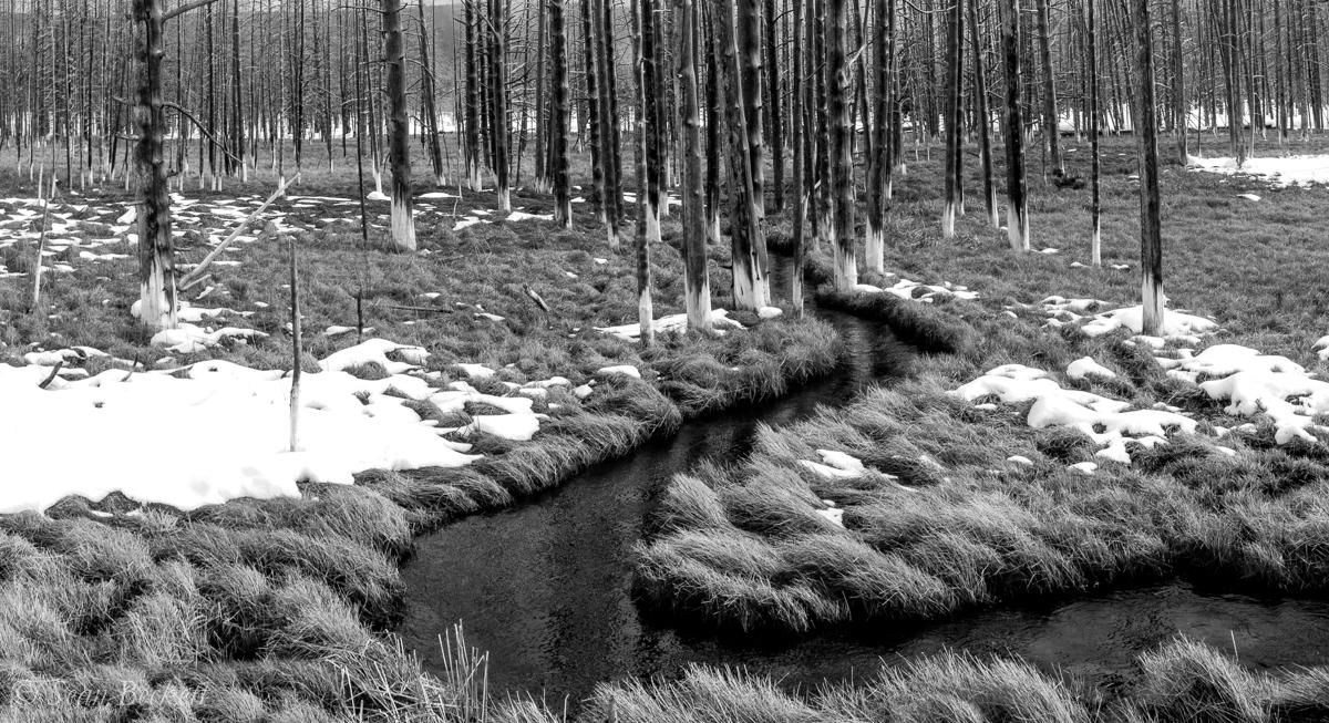 NHAJan31_18_Yellowstone-8.jpg