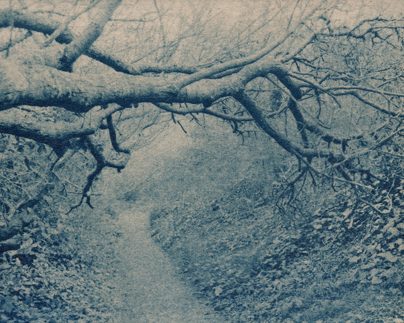 Gum bichromate over cyanotype