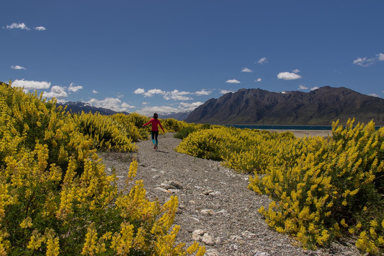 lupins_hiker_newzealand