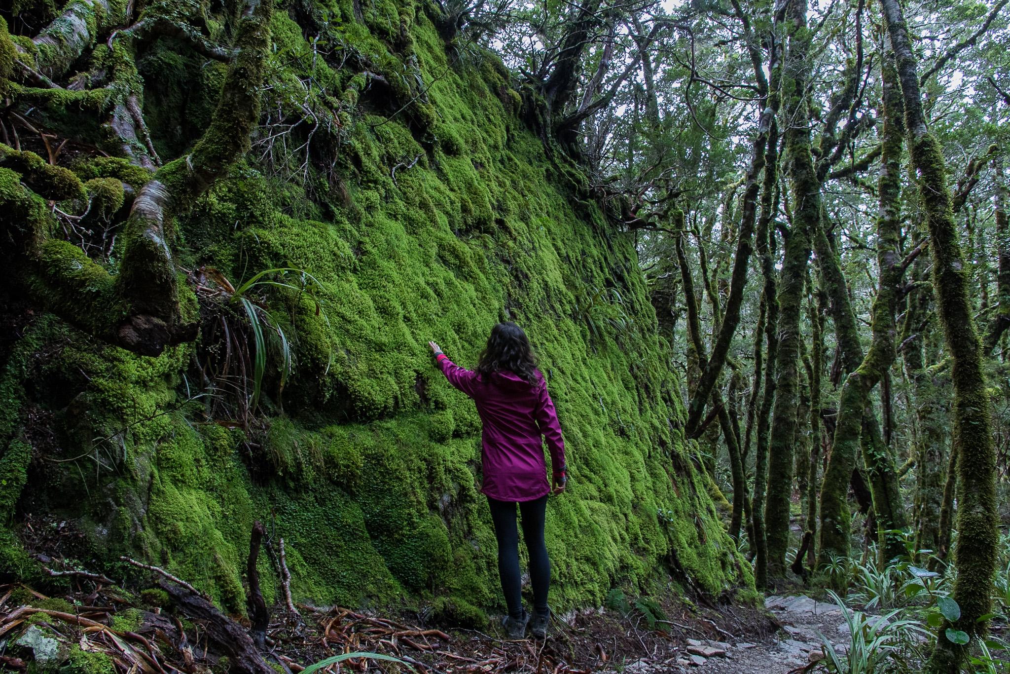 hiker_moss_forest