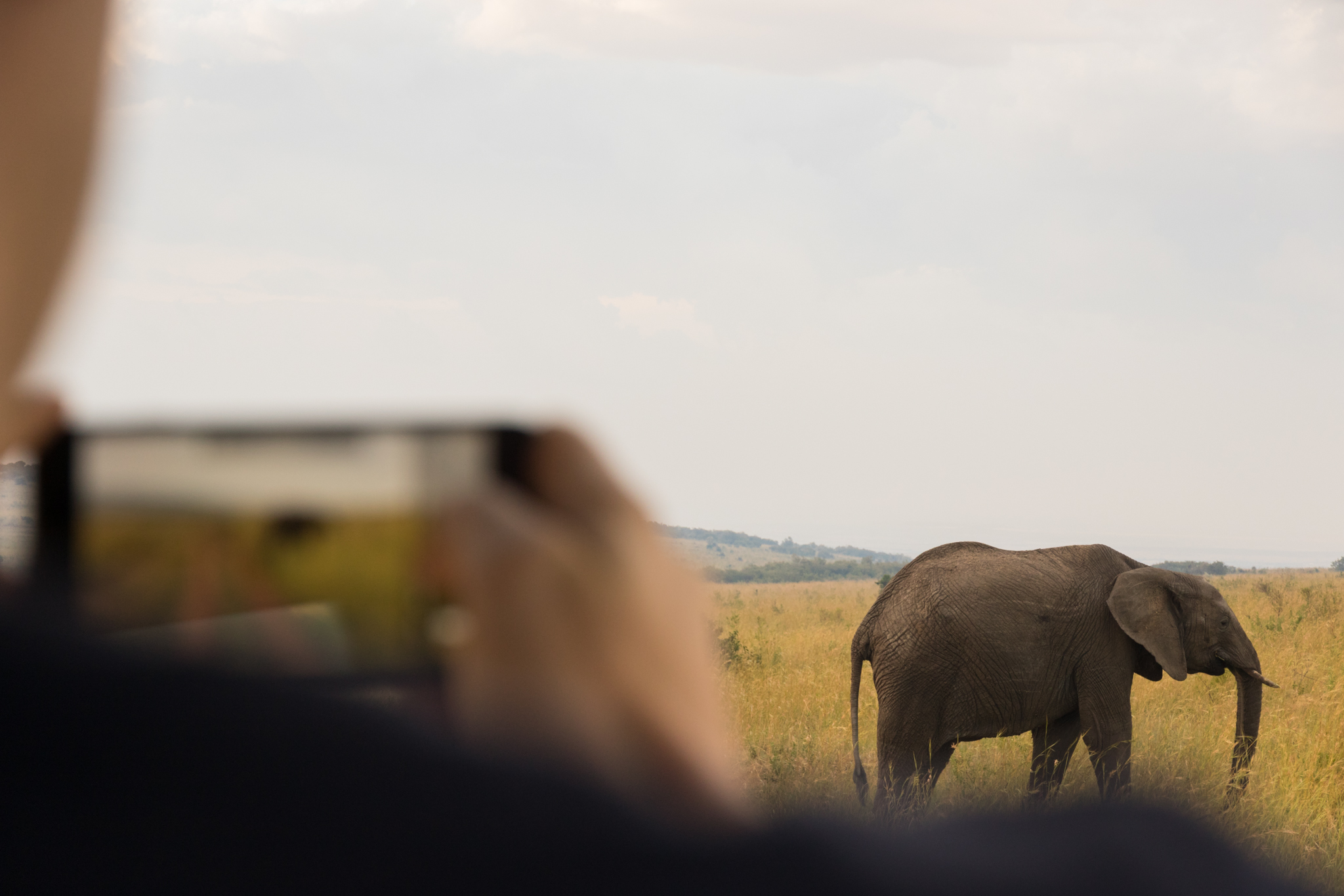 kenya_elephant_photographer