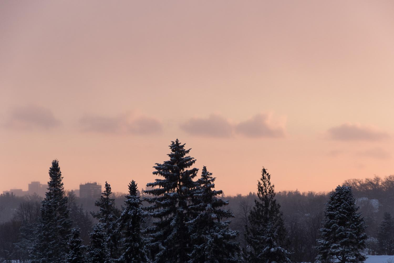 winter_evergreens_sunset-1.JPG