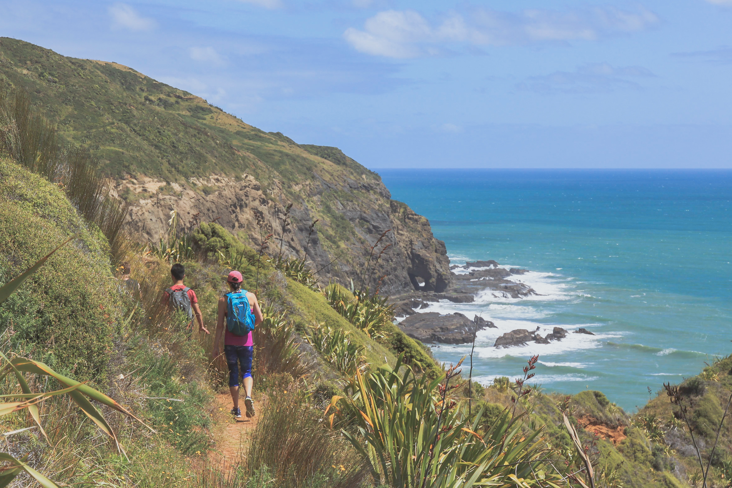 hiking te henga walkway New Zealand