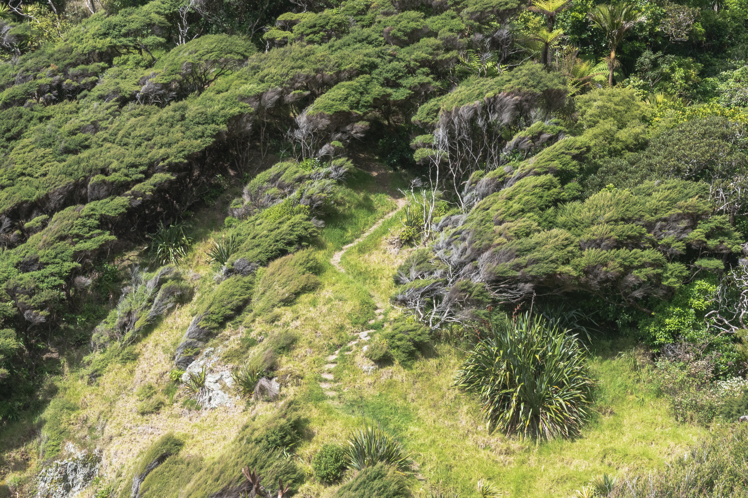 tramping track new zealand