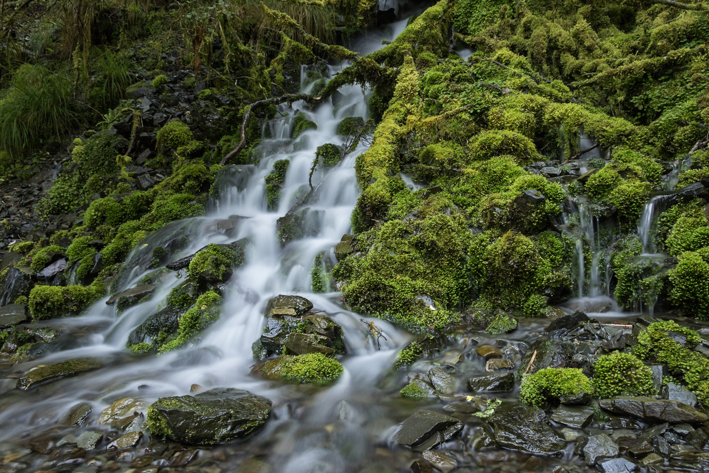 a New Zealand waterfall covered in green moss