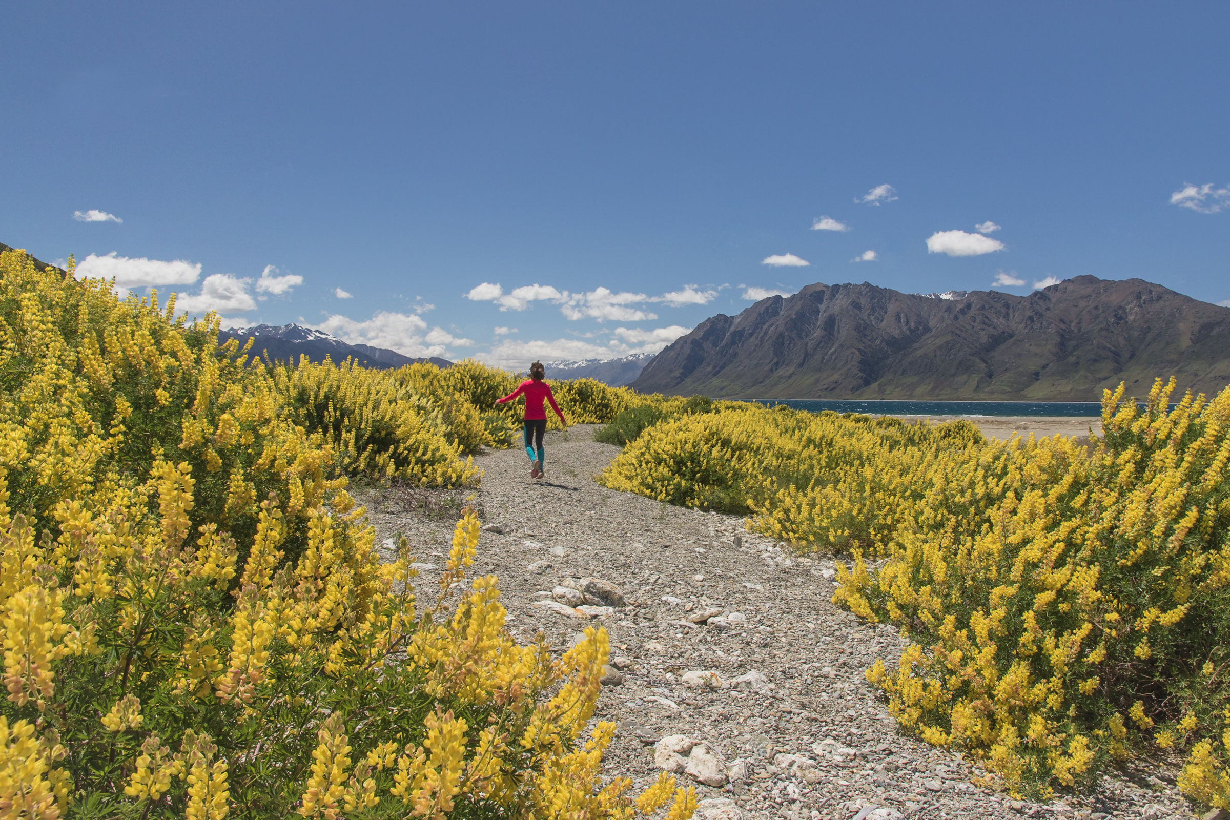 female hiker running through a corridor of lupins in New Zealand