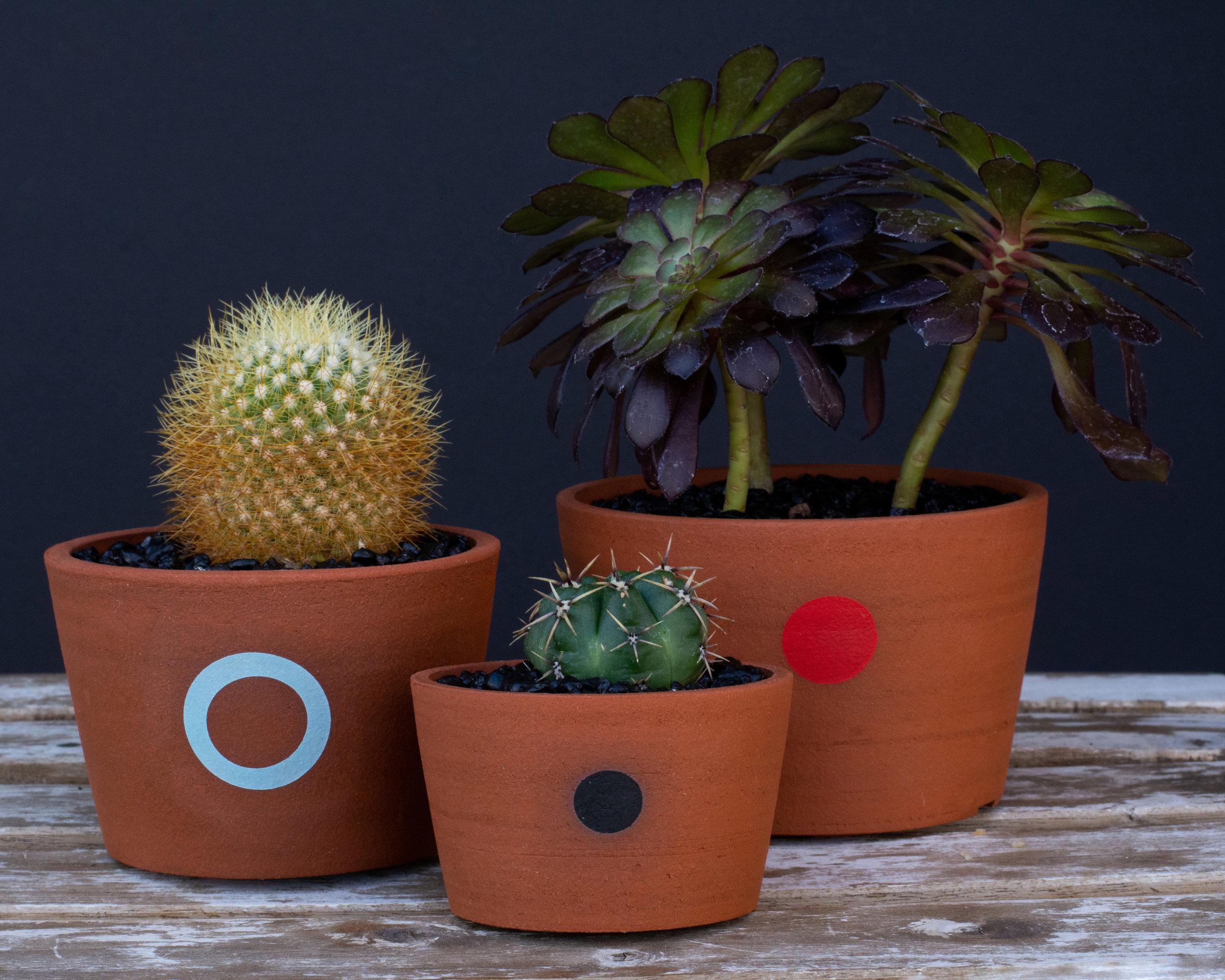 Plant design by  Opuntia Cafe , Photo by  Nicole Cudzilo