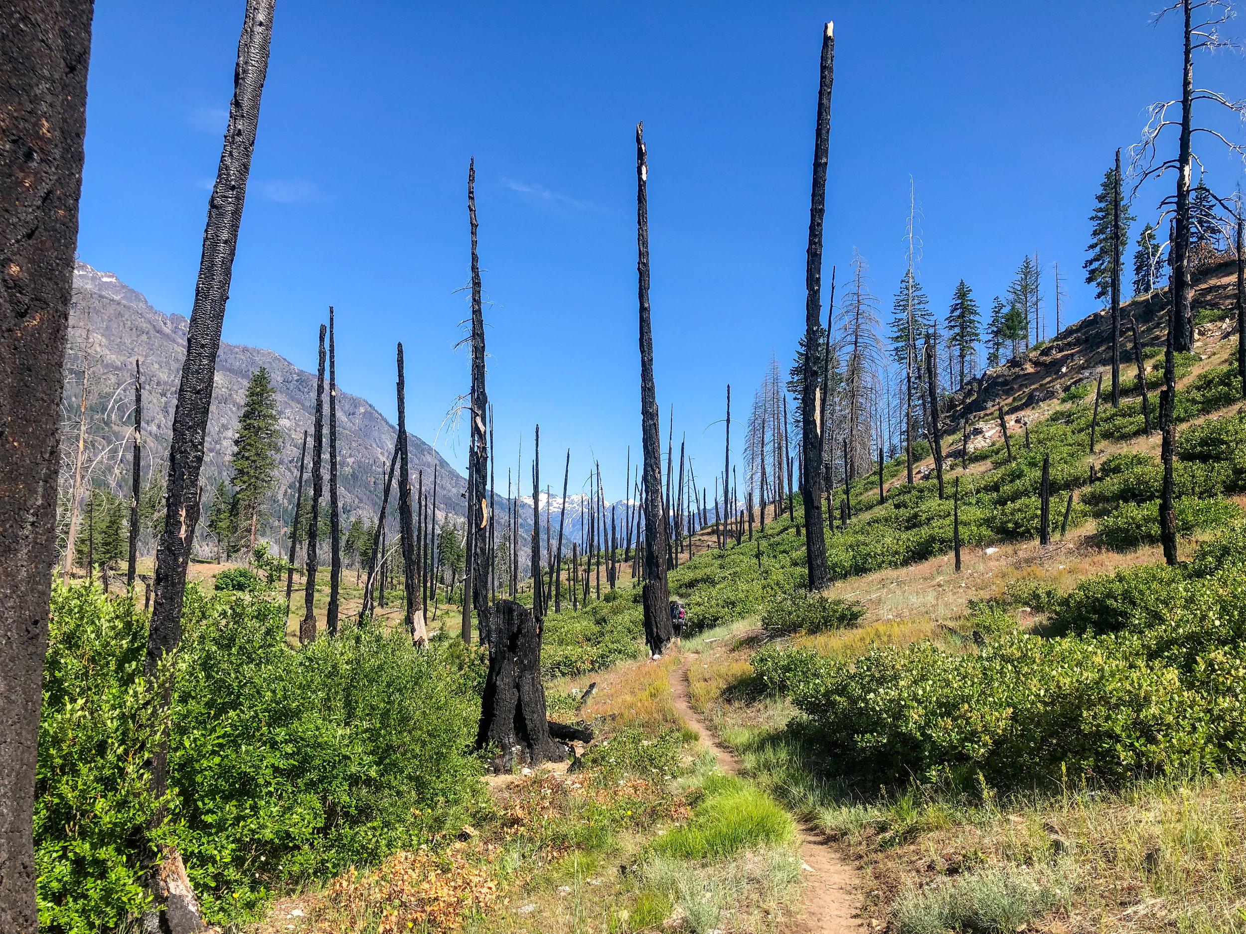 Hiking through burned areas