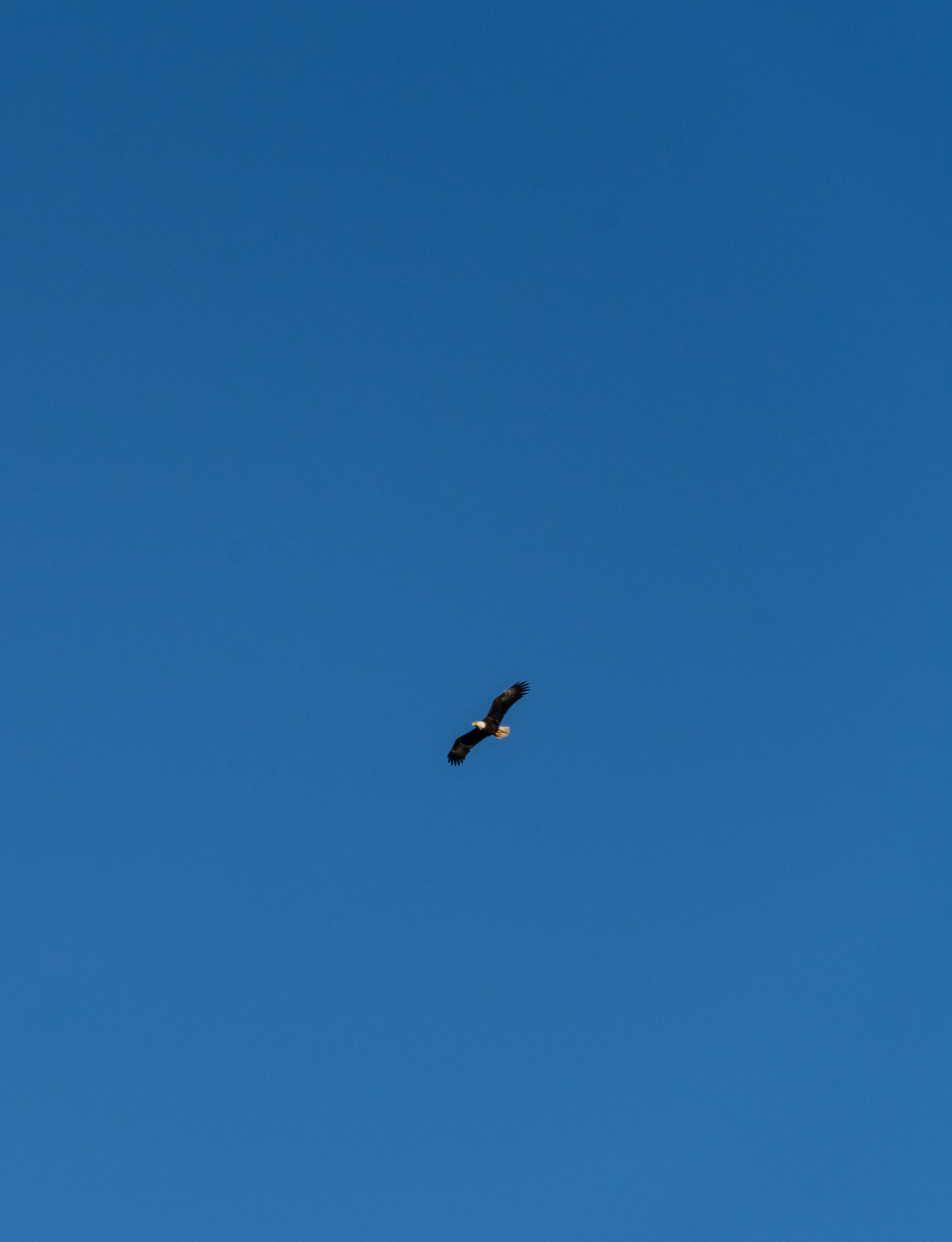 Saw so many bald eagles