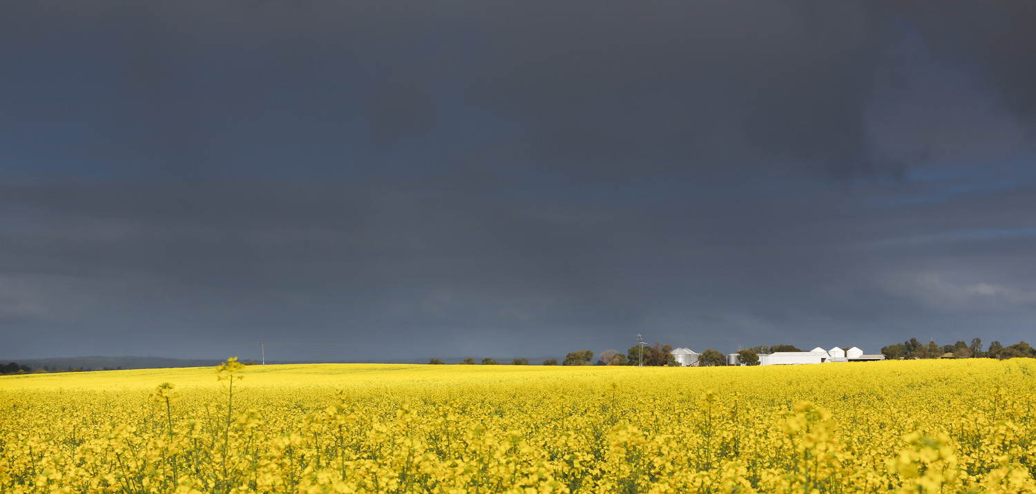 From our photo/video shoot in Western Australia for Lawson Grains