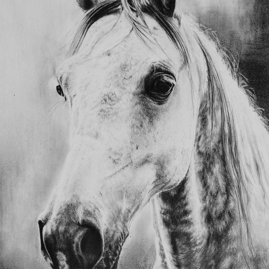 Dapple Grey Horse -