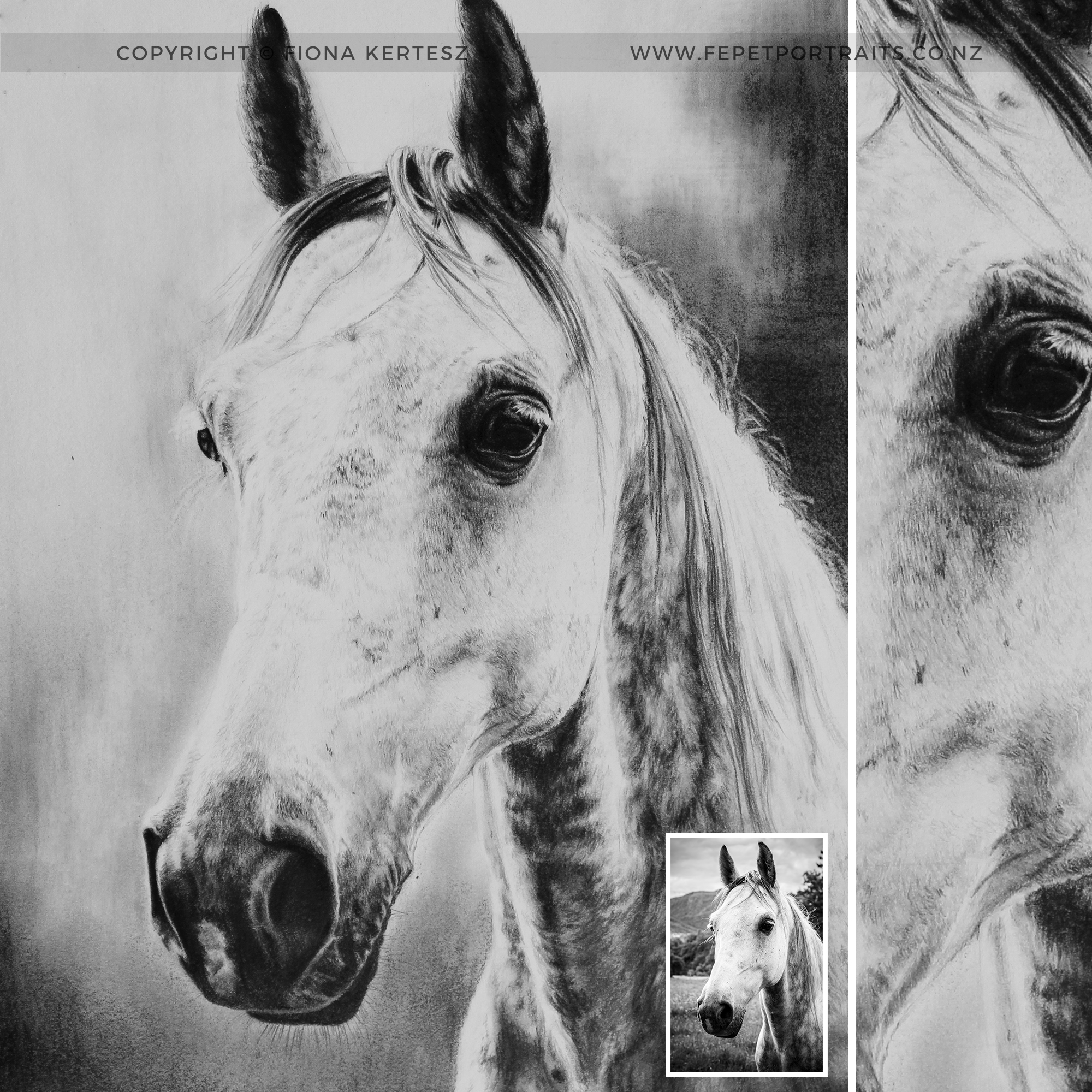 Dapple-Grey-Horse.jpg