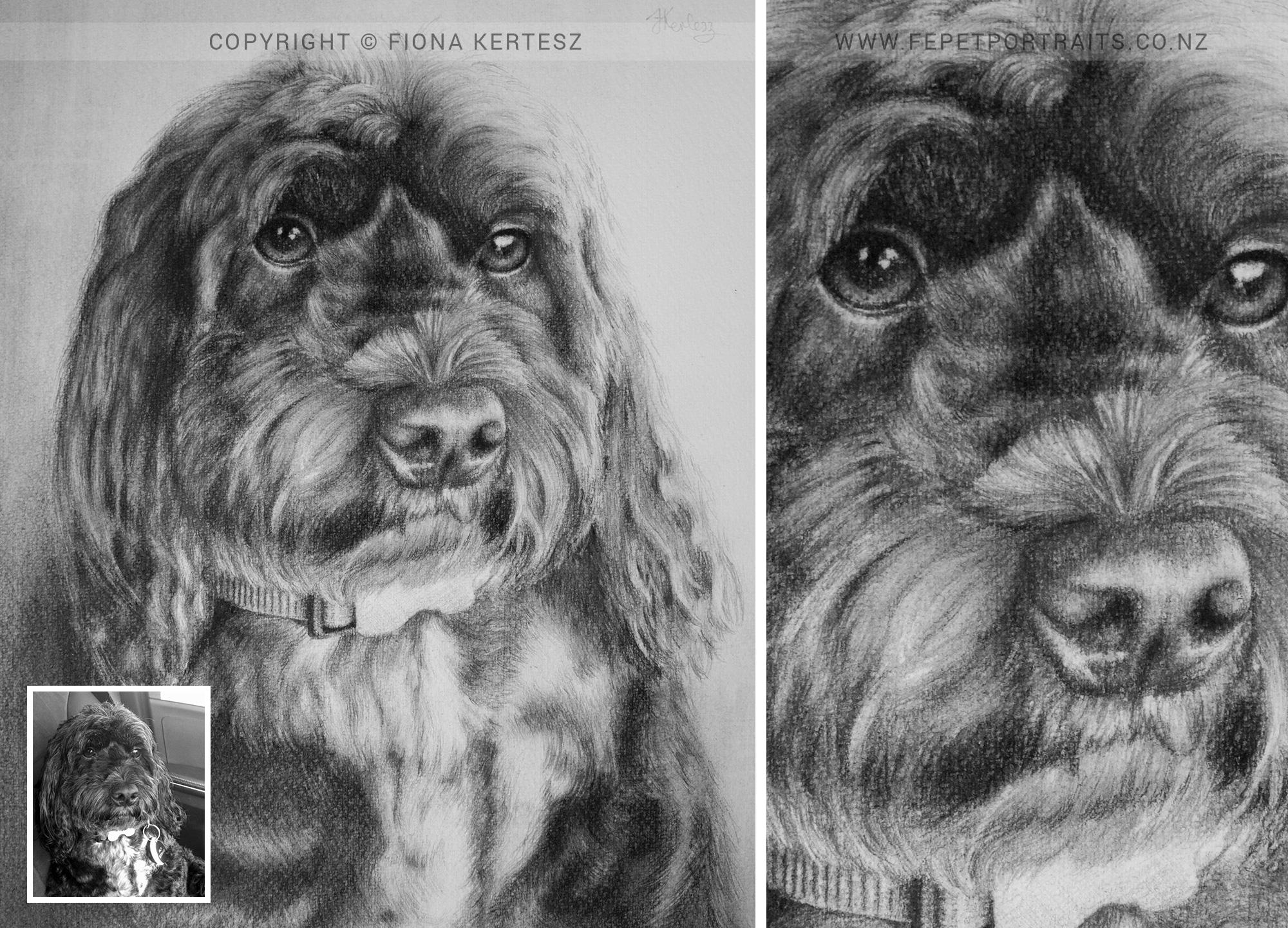 Jack, Pencil Portrait, 13 x 11 inch