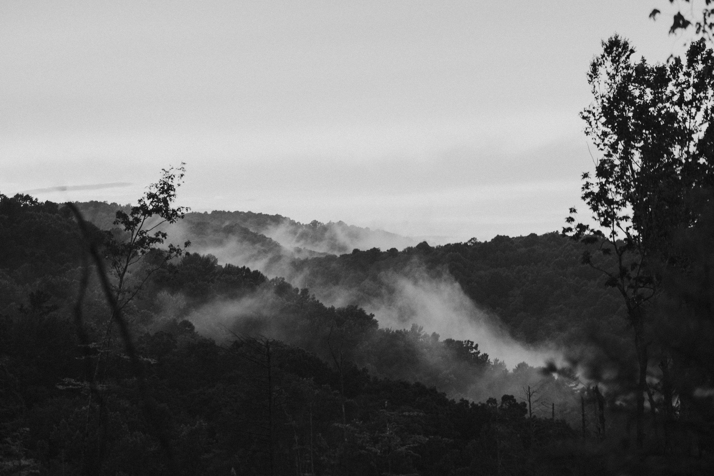 bw- fog in the trees - getoutside -adventurealliance